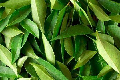 curryleaves