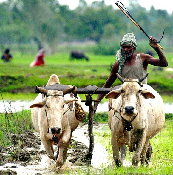 simple joys hardships in life of an indian farm worker George orwell is the pen name of eric arthur blair: essayist, novelist, literary critic, advocate and fighter for political change, and man of contradictions blair was born on june 25, 1903, in the bengal region of eastern india, which was a british territory he was the son of richard walmesley.